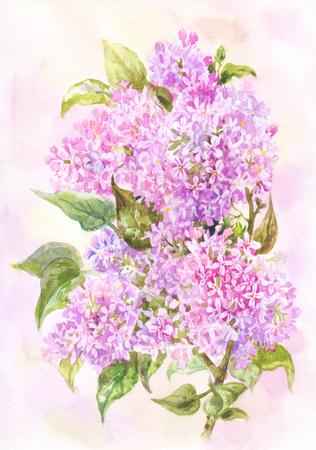 Watercolor lilac branch.