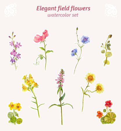 Set of field elegant flowers. Watercolor isolated elements