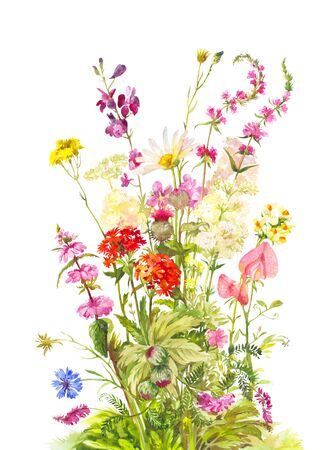 Watercolor bouquet of flowering plants. Cornflower, thistle, lychnis chalcedonica and other. Bright vintage illustration