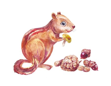 Chipmunk eating nuts and mushroom. Funny little forest animal isolated. Watercolor illustration