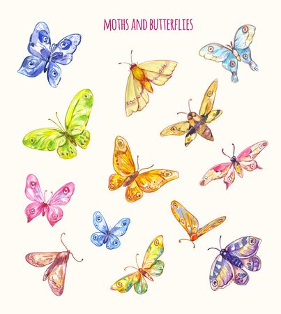 Bright vector butterflies set. Different moths isolated