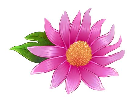 Vector echinacea flower, healing herb isolated. Illustration suitable for herbal tea package, purple chamomile Vettoriali