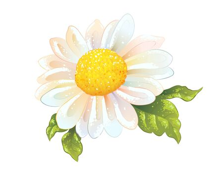 Chamomile flower, vector illustration of daisy in sketch watercolor style