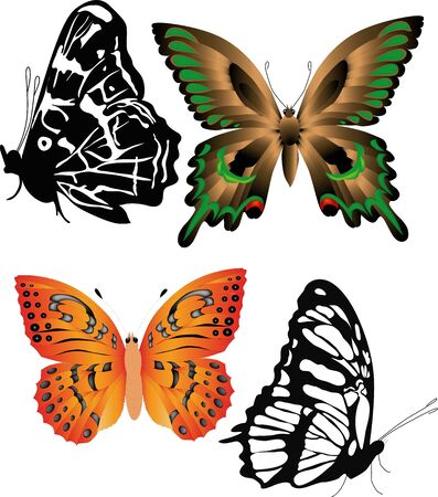 butterfly nature insects Иллюстрация