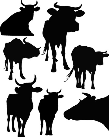 cow animals isolated on white background Vector
