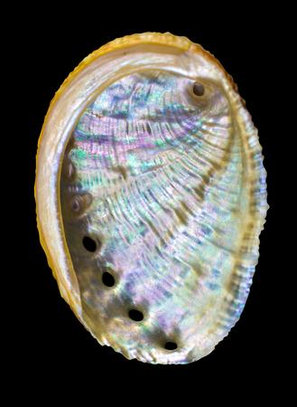 Seashell on a black background Stock Photo