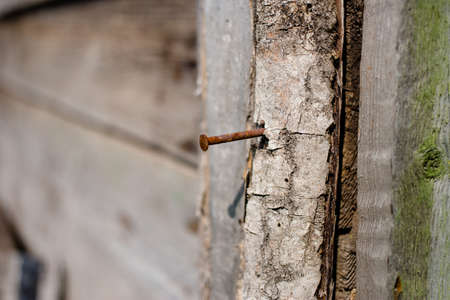 Rusty iron nail in the wall of an old wooden house on a sunny summer day