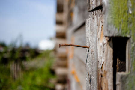Rusty nail in the wall of an old wooden house on a sunny summer day