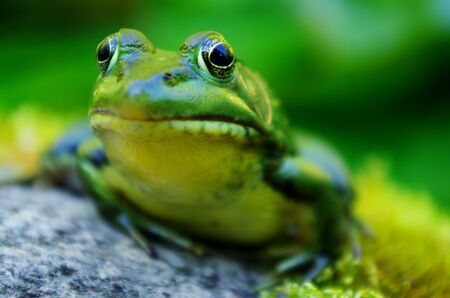 개구리 코