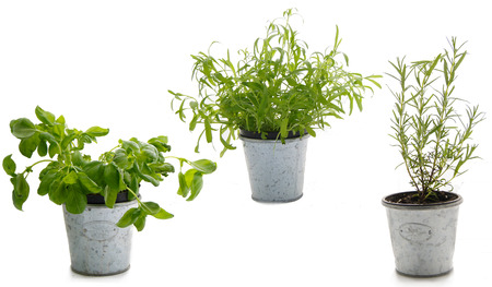 basil rosemary tarragon Placed in metal pots