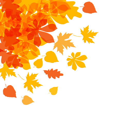 Vector of autumn yellow orange leaves on a white background. 矢量图像