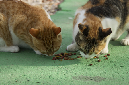 catfood: Two different color cats eating catfood on the green asphalt