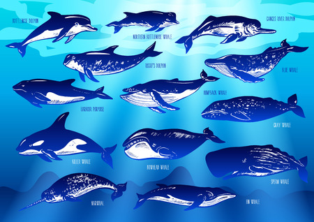 Set of  dolphins and whales on underwater background. Illustration