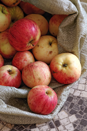Rustic apples in a rough fabric bag. Natural rural products. Ecological fruits without pesticides and GMOs. Stock Photo
