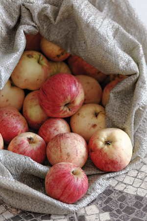 apple gmo: Rustic apples in a rough fabric bag. Natural rural products. Ecological fruits without pesticides and GMOs. Stock Photo