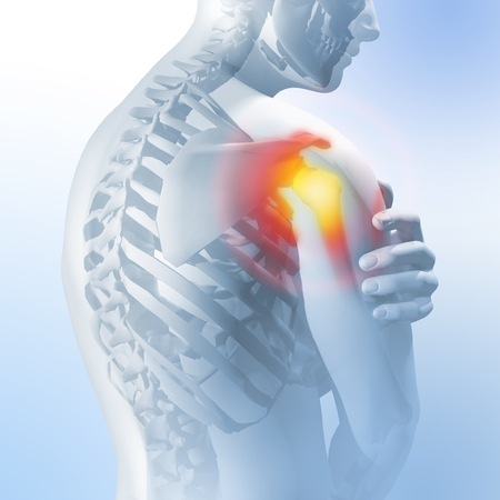 Concept of shoulder pain. Transparency of the skeleton and body. 3d medical anatomical illustration.