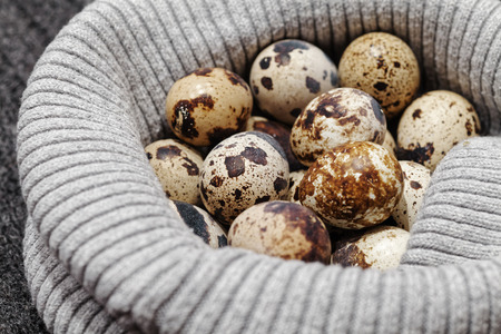 Close-up of raw quail spotted eggs.