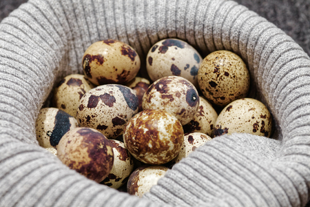 hosiery: Close-up of raw quail spotted eggs.