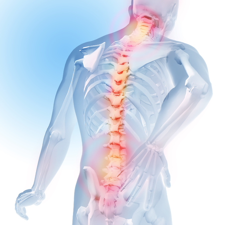 Concept of spine pain. Transparency of the skeleton and body. 3d medical anatomical illustration.
