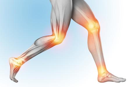 Medische illustratie van een beenpijn in anatomie transparante mening. Het skelet, spieren, met afzonderlijke delen. 3d render. Stockfoto