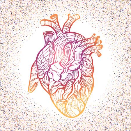 Hand drawing sketch anatomical heart. Doodle zentangle vector illustration. Illustration