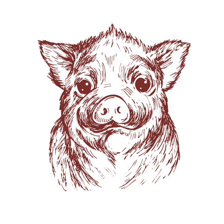 Hand draw a portrait of a little pig. Vector sketch illustration. Symbol of a Chinese New Year 2019