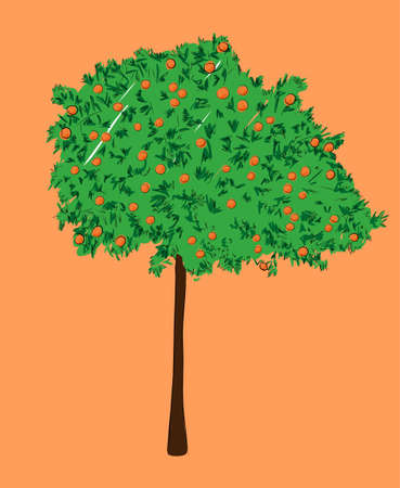 orange tree: An orange tree isolated on a background. Hand-drawn sketch. Art vector illustration for your design