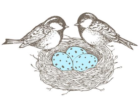 birds nest: Birds, nest, eggs,