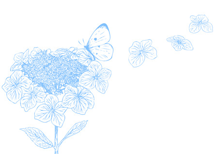 Hydrangea flower with butterfly Illustration