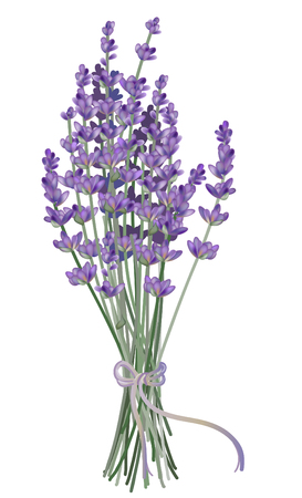 Realistic lavender illustration.
