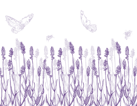 Hand drawn pen and ink lavender border and butterfly illustration.