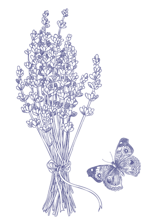 Hand drawn pen and ink lavender and butterfly illustration. Banque d'images - 108444936