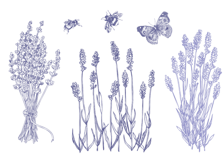 Hand drawn pen and ink lavender illustration with bee and butterfly. Illustration