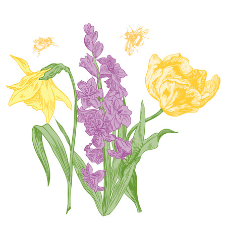 Hyacinth, daffodil, narcissus and tulips, spring flowers - hand drawn pen and ink illustration.