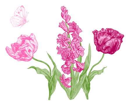 Hyacinth and tulips, spring flowers - hand drawn pen and ink illustration.