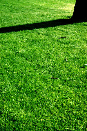 fresh cut grass with a tree and a shadow