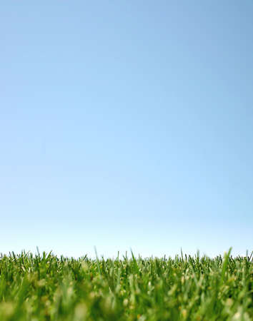 Blue sky with green grass photo