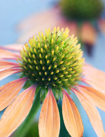 hope indoors luck: Beautiful flower with orange petals Stock Photo