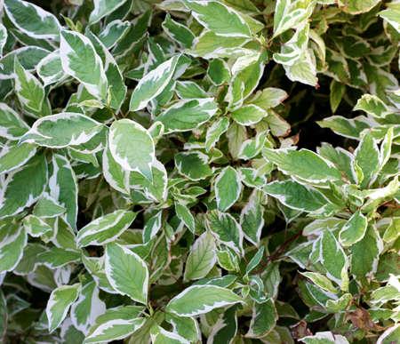 spunk: Beautiful hojas de verde y blanco