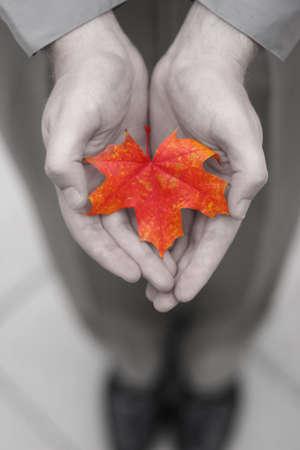 spunk: Hoja anaranjada en el manos de un hombre en tonos grises Foto de archivo