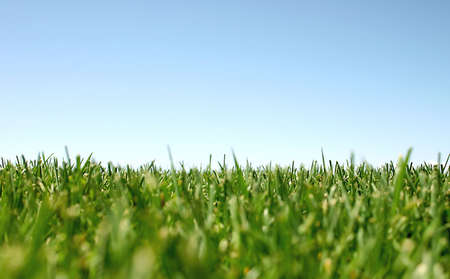 Blue sky with green grass Stock Photo - 456750