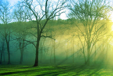 Black barked trees stand alone in the mist of the morning as the sun rises Stock Photo