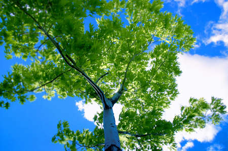Shot looking up a trees trunk towards the blue sky Stock Photo
