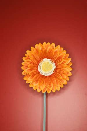 hope indoors luck: Orange flower against a reddish background