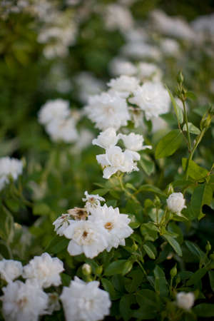 Small group of white flowers