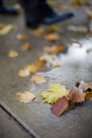 stepping: close up of businessman stepping into puddle on sidewalk littered with leaves