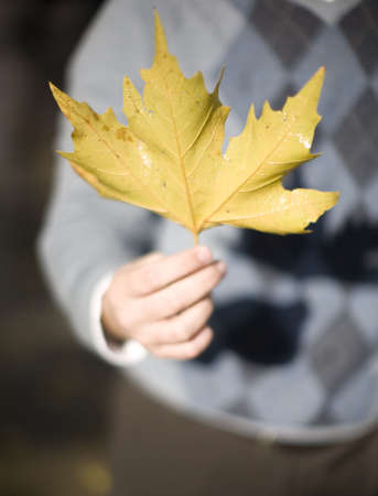 close up high angle view of one mans hand holding leaf