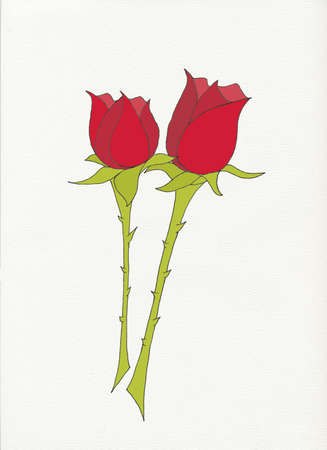 red rose: two red roses with thorny stems on white background