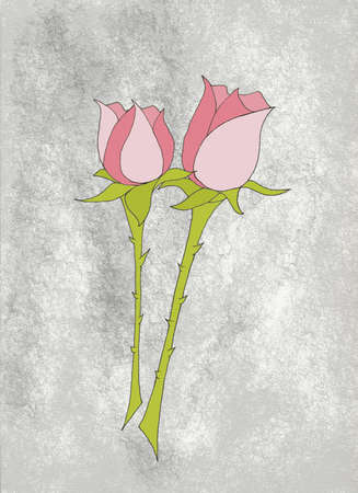 two pink roses with thorny stems on gray background