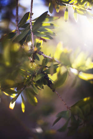 light coming through the leaves and branches of a tree outside